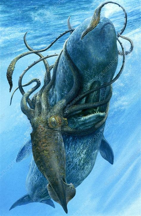 Giant squid and sperm whale, illustration - Stock Image